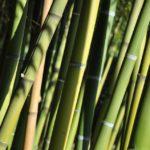 Comment installer une barrière anti-rhizomes ?