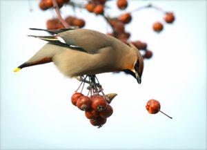 Comment protéger vos fruits des oiseaux ?