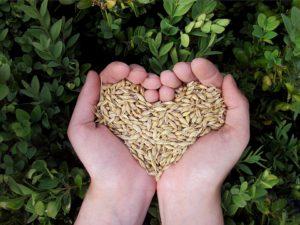 Que semer et planter en mai ?