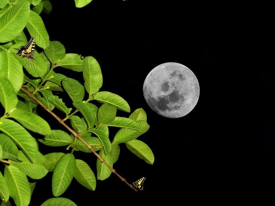 Calendrier lunaire mai 2017