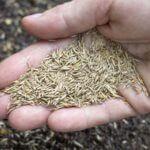 Comment semer votre gazon ?