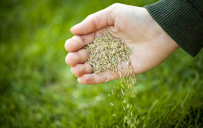 Quand semer votre gazon ?