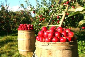 Comment récolter vos fruits et légumes ?