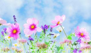 Quelles cultures florales faire à la fin du printemps ?