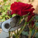 Quels sont les outils indispensables pour entretenir vos végétaux ?