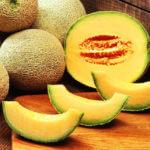 Tout savoir sur le melon