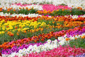 Quelles couleurs utiliser dans votre jardin
