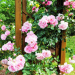 Quelles cultures florales réaliser entre juillet et septembre