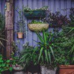 Quelles plantes mettre en pots dans votre jardin