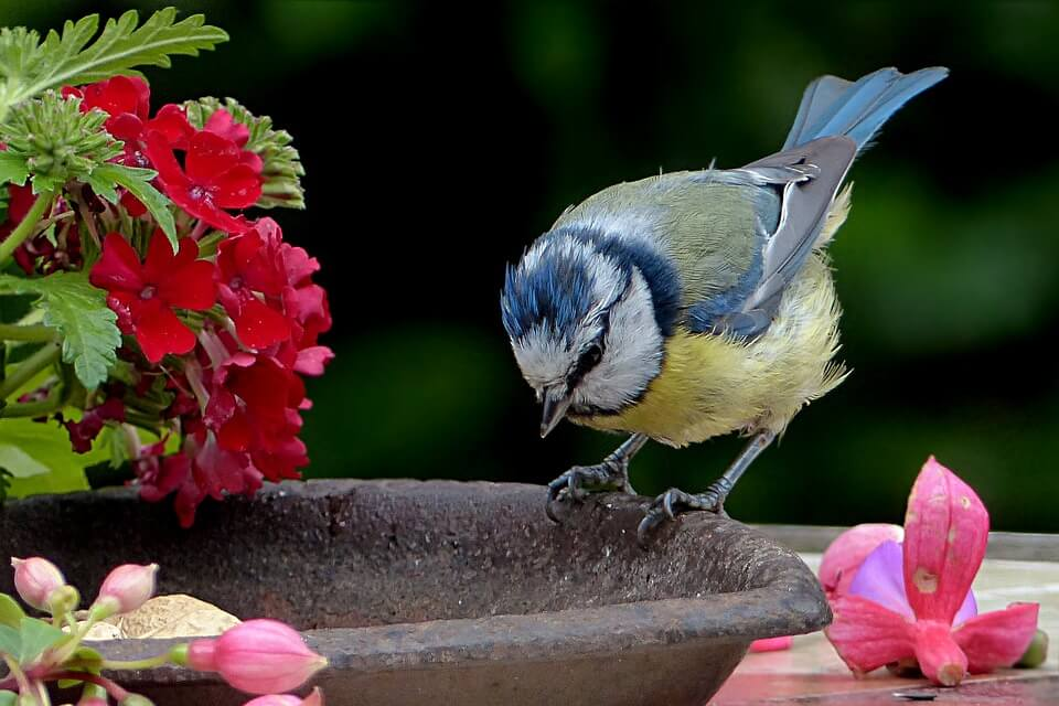 Comment am nager votre jardin pour les oiseaux le blog de - Compagnie des produits pour le jardin ...