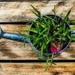 Comment arroser vos plantes d'intérieur
