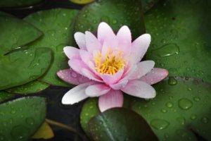 Comment créer un bassin dans votre jardin ?