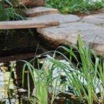 Comment créer un mini-jardin d'eau