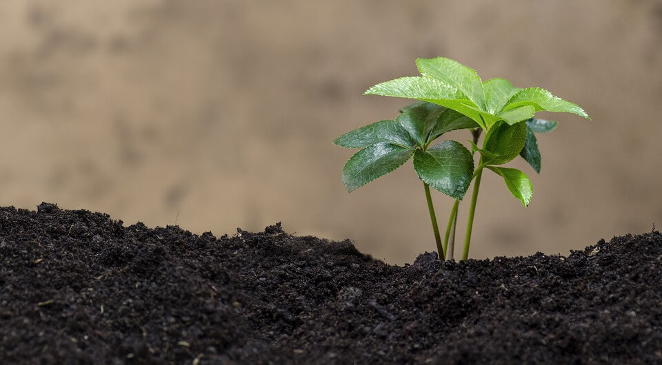 Comment cultiver votre jardin biologique