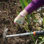 Comment désherber votre jardin biologique