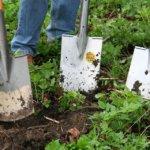 Comment entretenir le sol de votre jardin biologique
