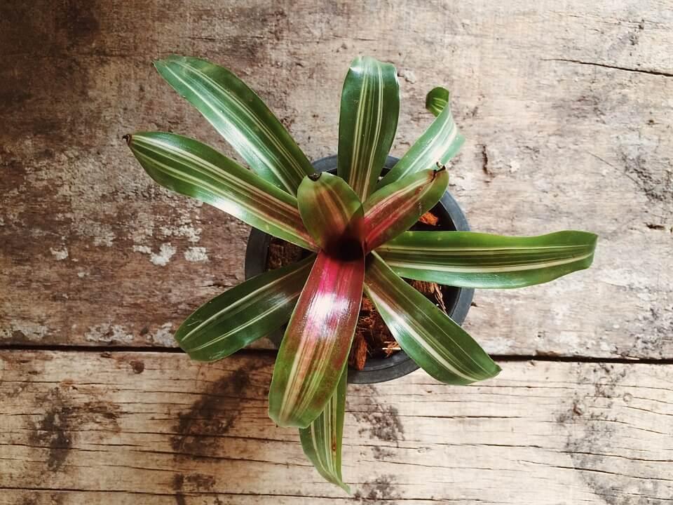Comment entretenir vos plantes d'intérieur