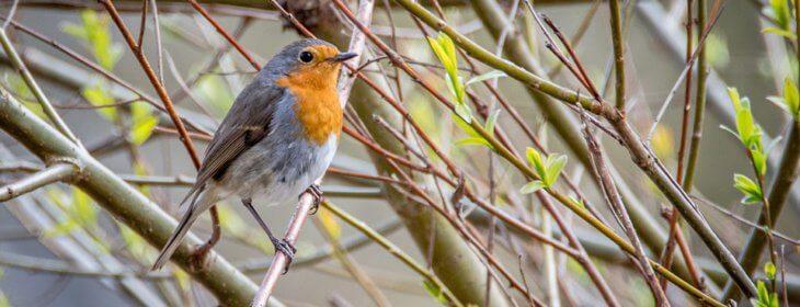 Comment jardiner pour les oiseaux ?