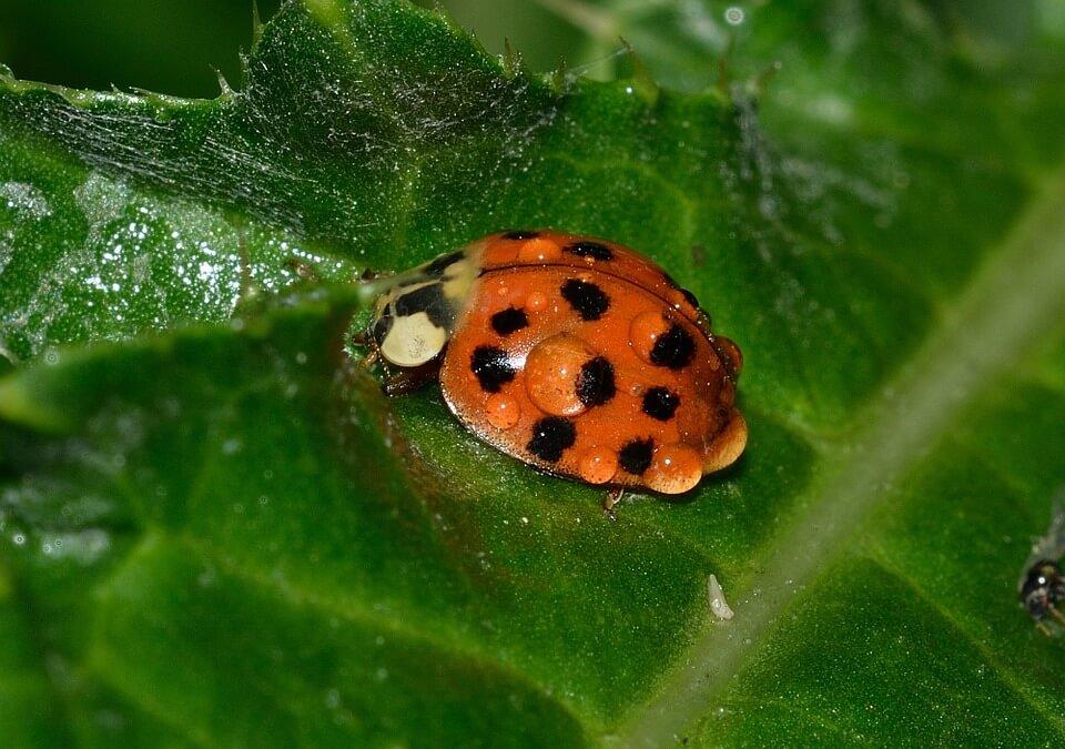 Comment protéger votre jardin biologique
