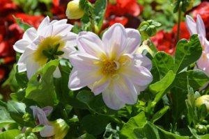 Comment réussir votre massif de fleurs