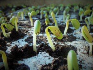 Les différentes méthodes de semis en pleine terre
