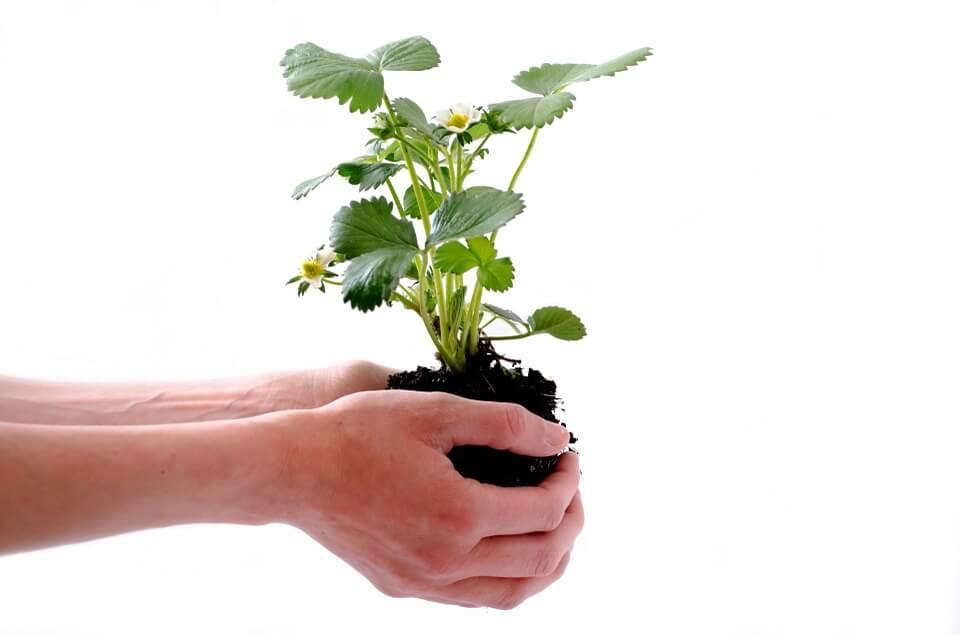 Qu 39 est ce que le semis un proc d de reproduction - Qu est ce qu un jardin ...