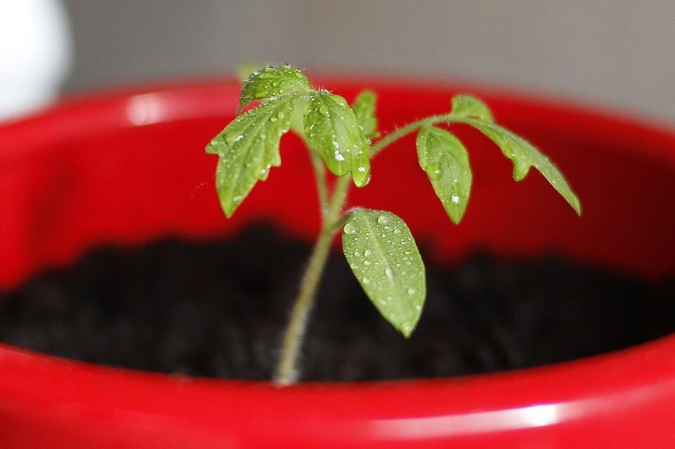Comment élever vos plants en godets