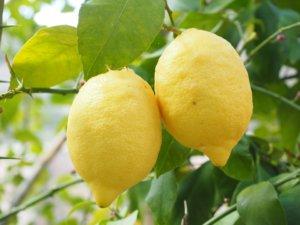 Comment entretenir vos arbres fruitiers ?