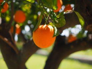 Comment planter vos arbres fruitiers ?