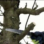 Comment restaurer vos arbres fruitiers ?