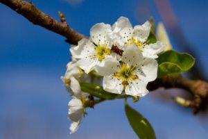 Quelles sont les différentes formes arquées des arbres fruitiers ?