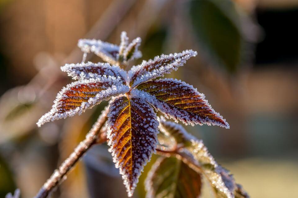 Qu'est-ce que le voile d'hivernage ?