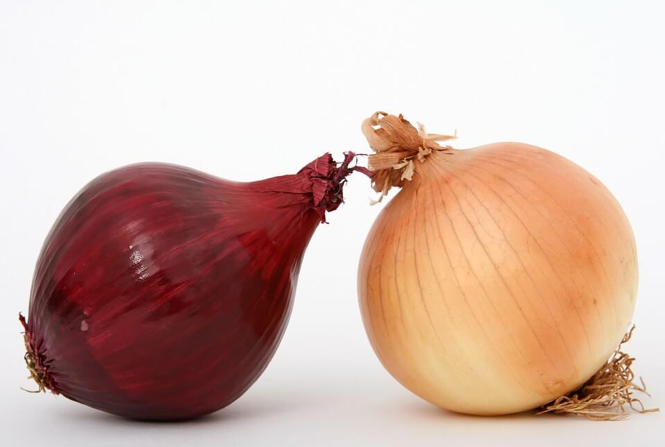 Tout savoir sur les oignons de couleur
