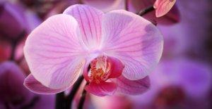 Tout savoir sur les orchidées