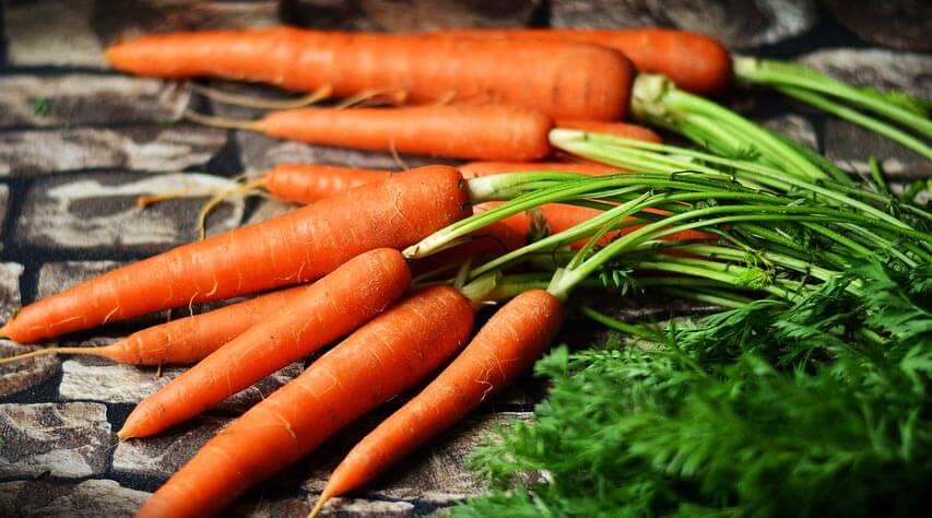 Tout savoir sur la carotte