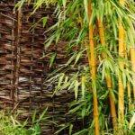 Comment se débarrasser du bambou dans votre jardin ?