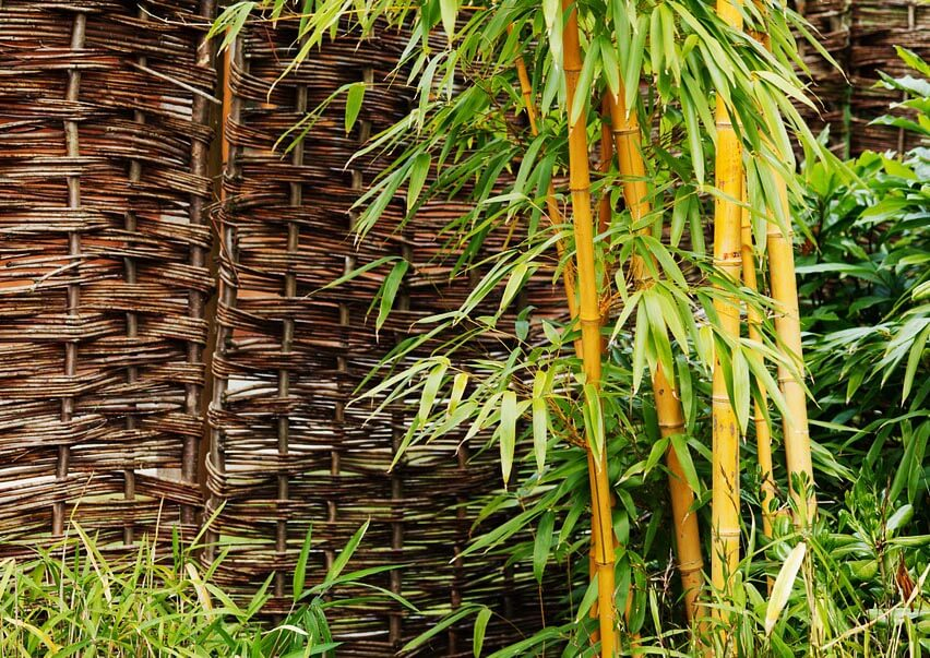 Comment se d barrasser du bambou dans votre jardin - Comment se debarrasser du liseron au jardin ...