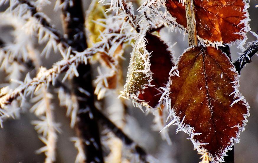 Qu'est-ce que la rusticité des plantes ?