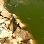 Que faire contre l'eau verte dans votre bassin ?