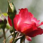 Quelles cultures florales réaliser de fin avril à fin mai ?