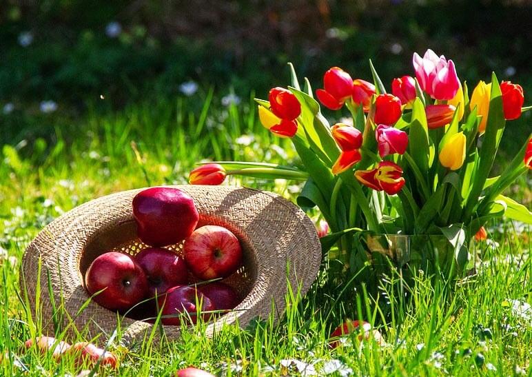 Quoi faire au verger et en cultures florales entre fin mars et fin avril ?