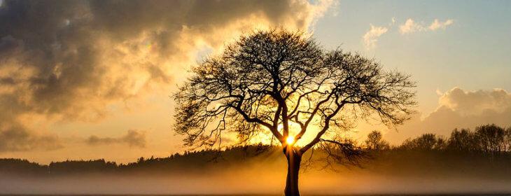 Comprendre les plantes et leur environnement