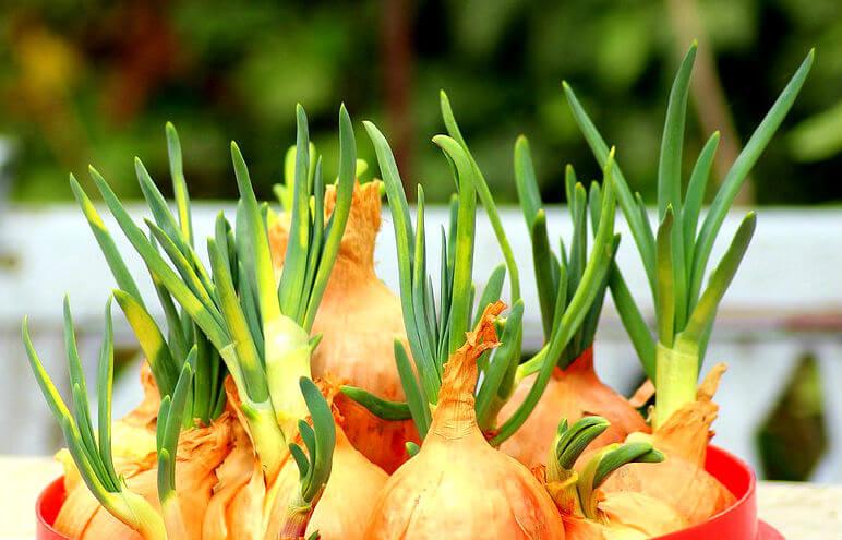 Quels sont les principaux organes d'une plante ?