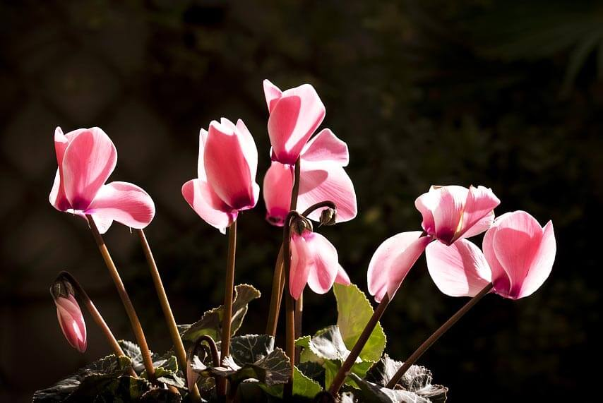 L'abécédaire des principales espèces et variétés de fleurs : C