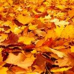 Que faire au jardin en automne