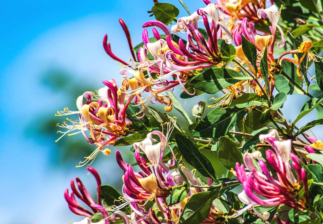Plantes qui fleurissent en hiver