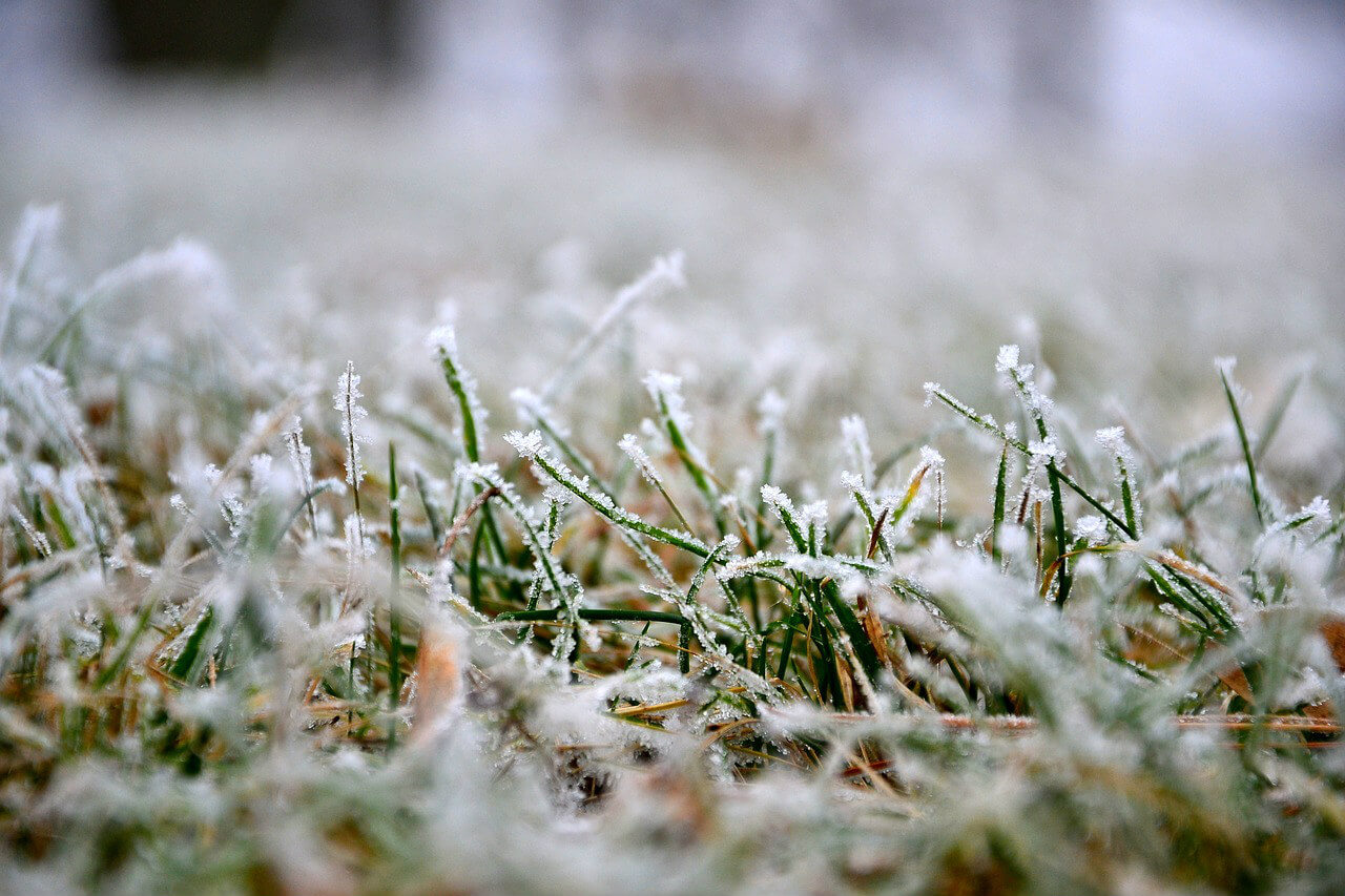 Entretenir le gazon en hiver