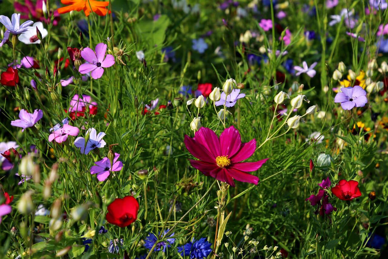 Plantes sauvages au jardin