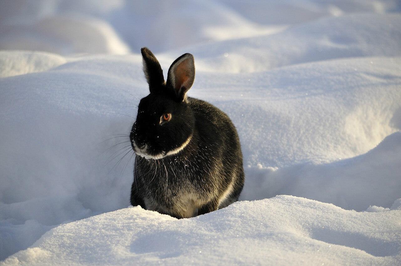 Préparer l'hiver des lapins