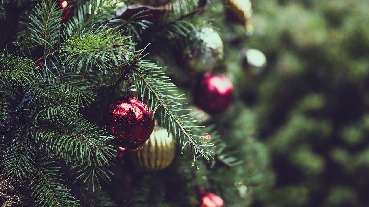 Replanter le sapin de Noël
